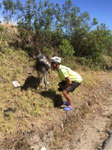 Anton und der Esel